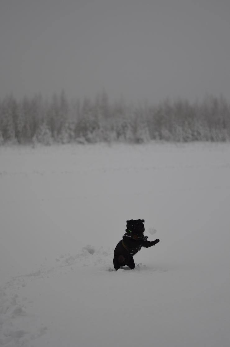 Jyka ottaa lumipallon