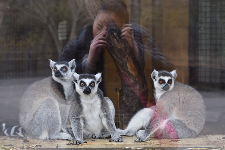 Warsaw Zoo DSC_0138