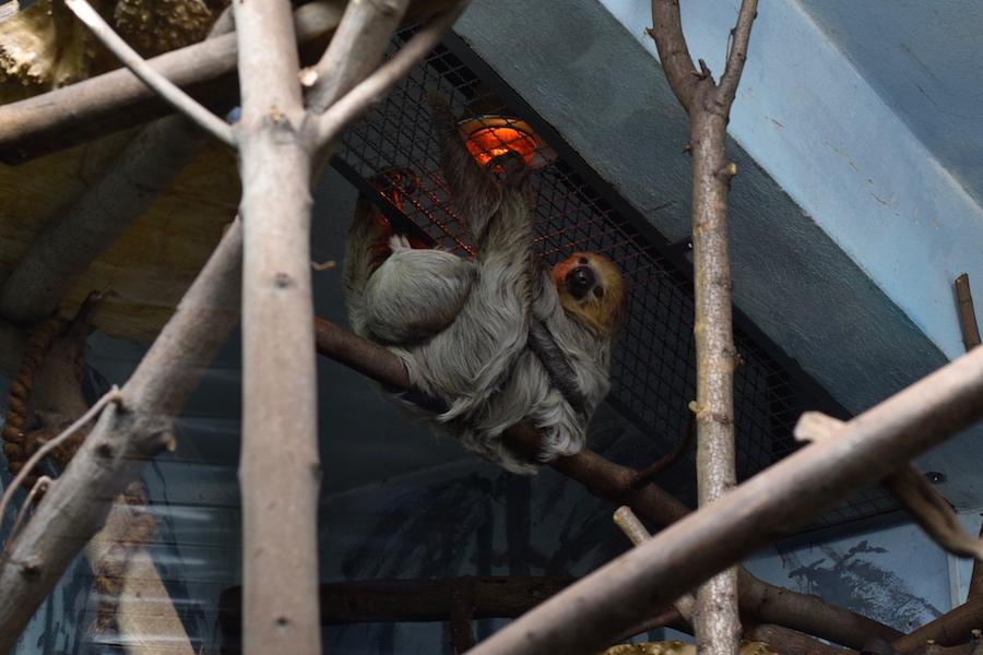 Warsaw Zoo DSC_0176