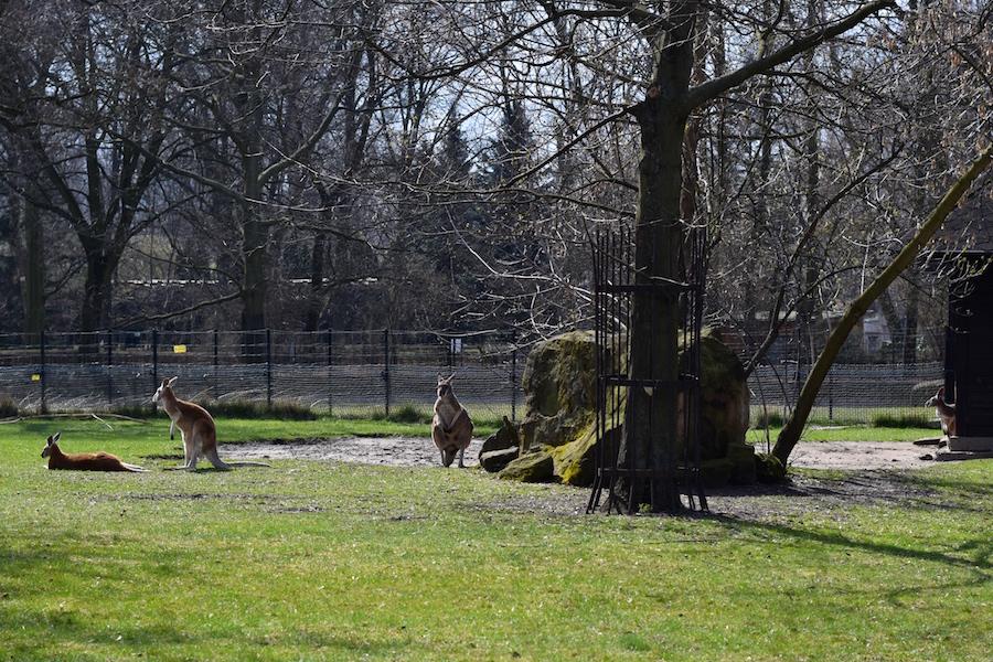 Warsaw Zoo DSC_0179