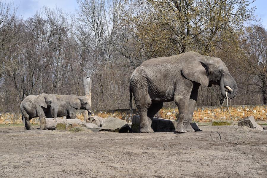 Warsaw Zoo DSC_0195
