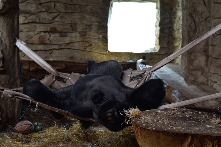 Warsaw Zoo DSC_0202