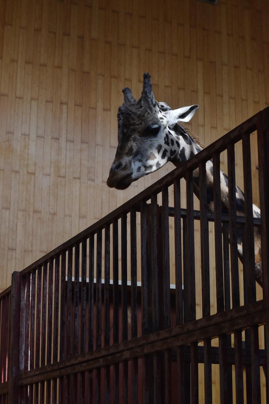 Warsaw Zoo DSC_0284