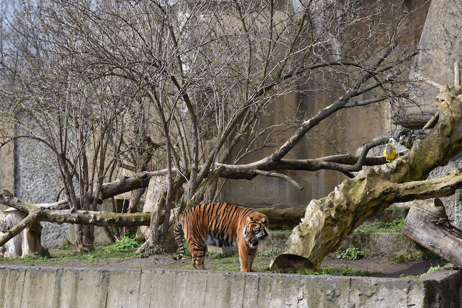 Warsaw Zoo DSC_0314