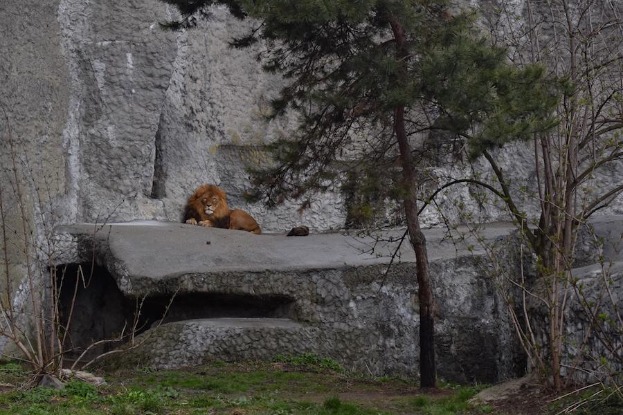 Warsaw Zoo DSC_0323