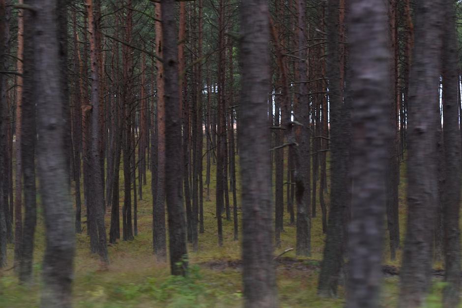 Nida Kuurinkynnas Liettua DSC_0002