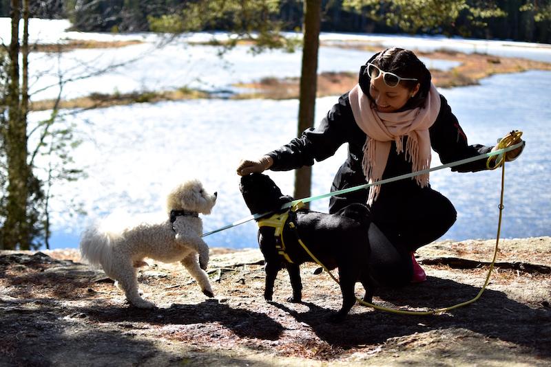 Nuuksiossa koiran kanssa DSC_0595