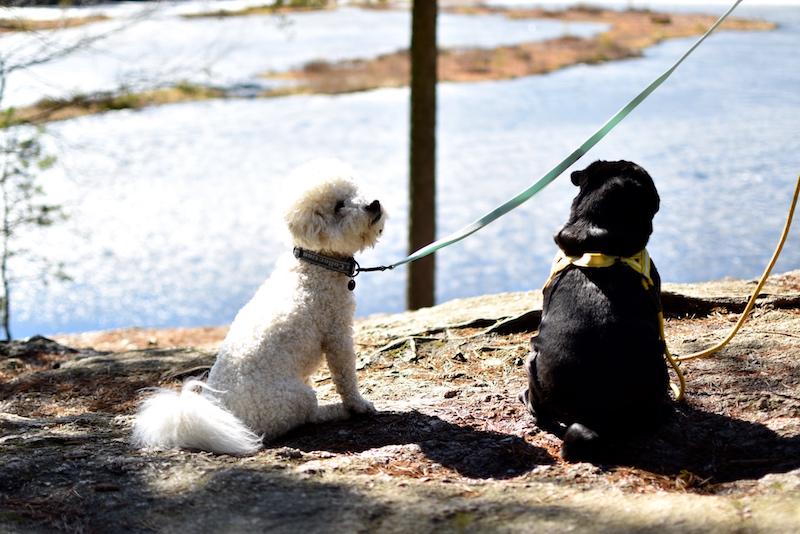 Nuuksiossa koiran kanssa DSC_0600