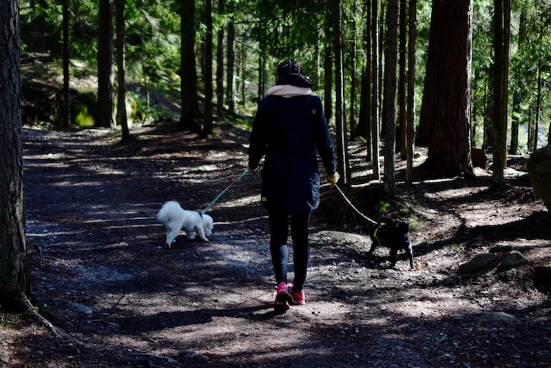 Nuuksiossa koiran kanssa DSC_0661
