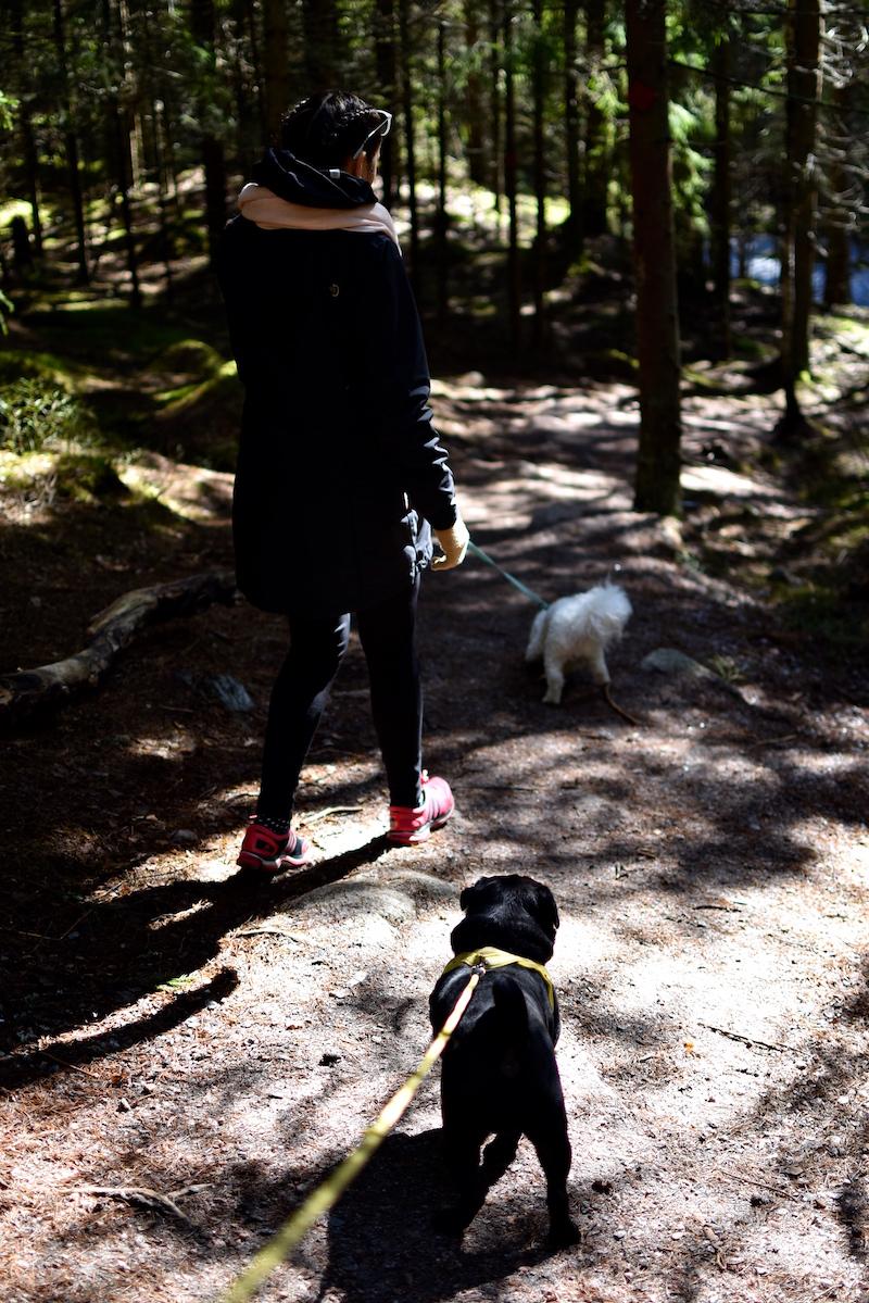 Nuuksiossa koiran kanssa DSC_0683