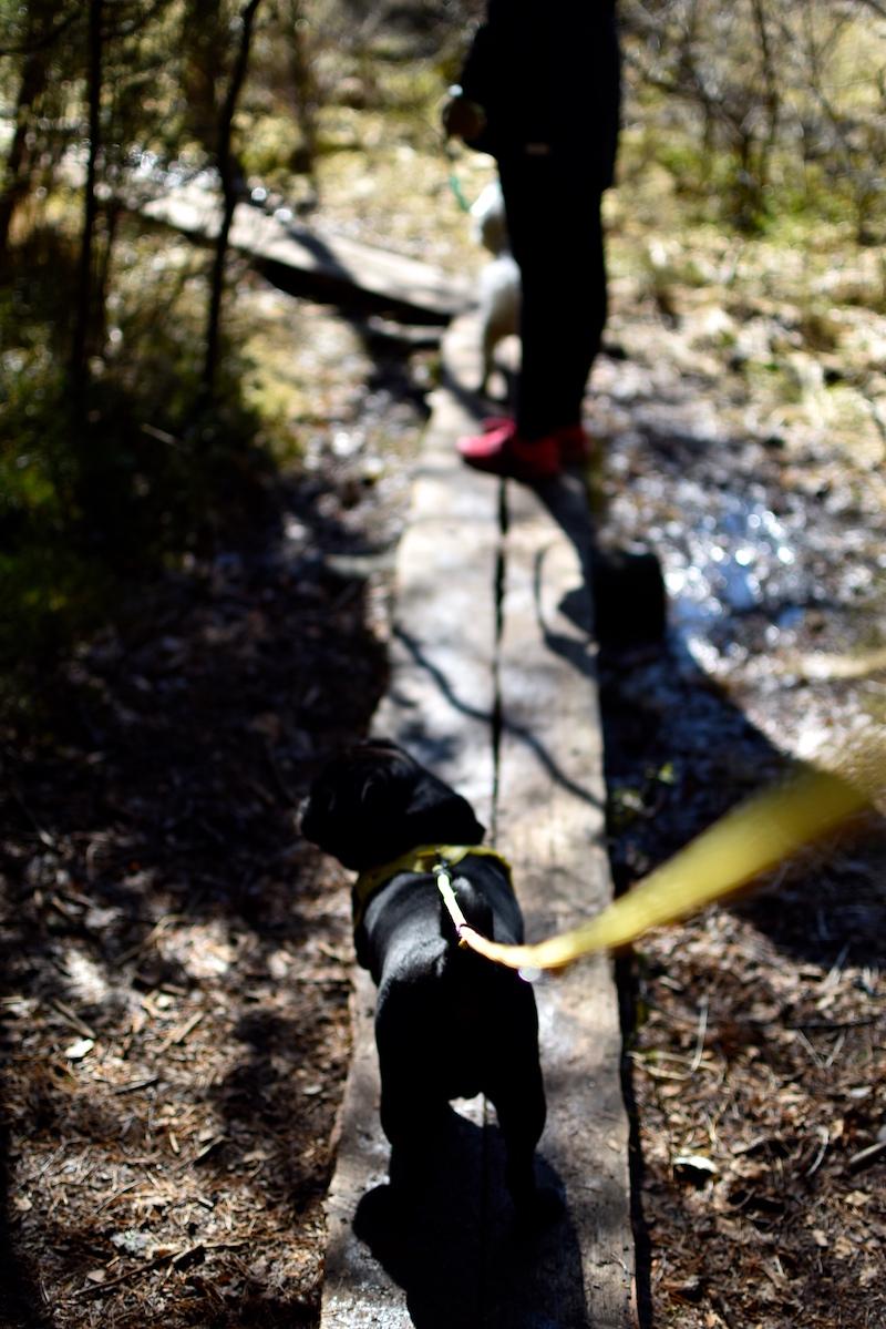 Nuuksiossa koiran kanssa DSC_0688