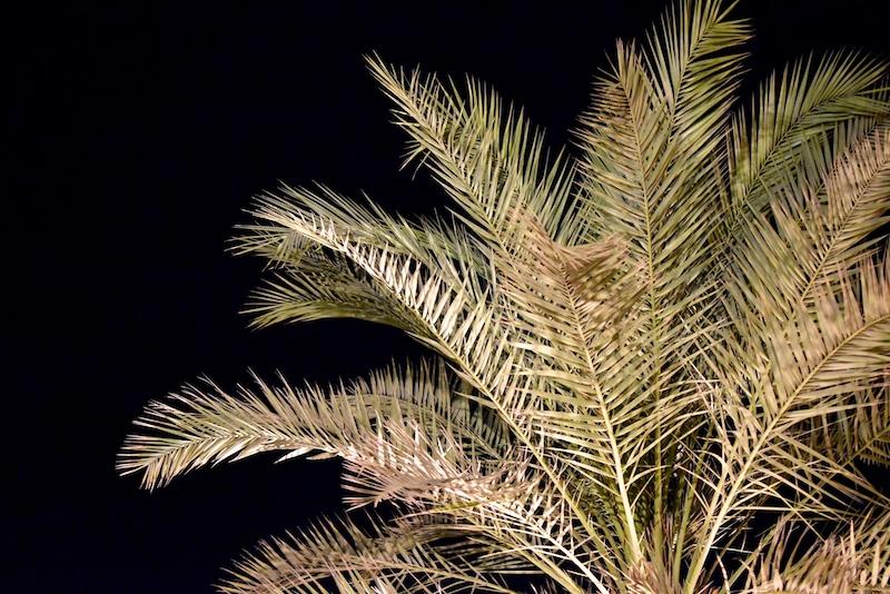 Hilton Ras Al Khaimah Resort Spa Arabiemiraatit DSC_0107
